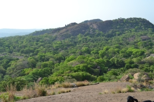 a view of the scrub on the way to the top. savandurga, india. may 2015.