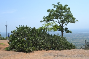 tree at the top, because we all know i love pictures of trees. savandurga, india. may 2015.