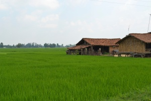 driving home through the rice paddies. bardiya, nepal. august 2012.