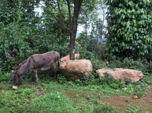 a donkey, just for good measure. coorg, india. 2015.