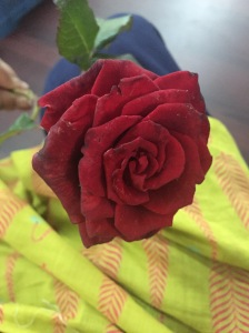 austin town gave me a rose one day, just because. bangalore, india. july 2015.