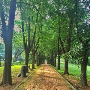 strolling through cubbon park. bangalore, india. november 2015.