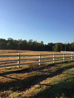 morning runs. memphis, tennessee. october 2016.